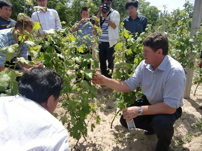 The Great Potential of Wine in China