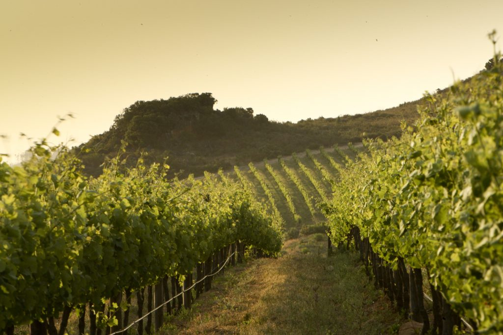 Tourism Supports Foreign Investment in The Winelands