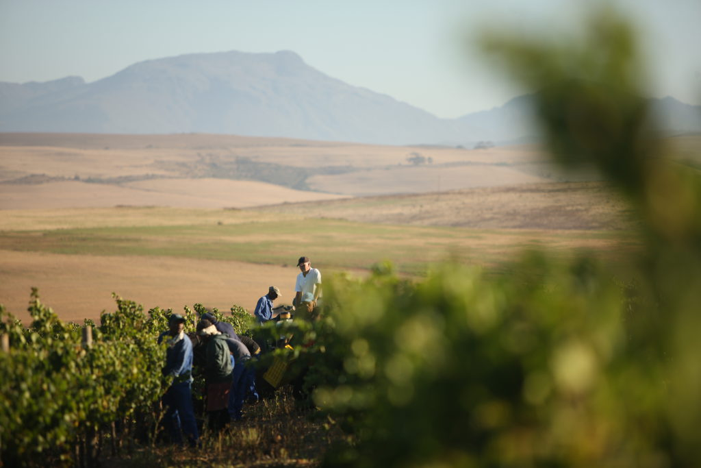 2017 SA Harvest – Does Dry Mean Dreary?