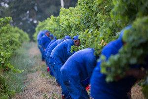 harvest3 2013 300x200