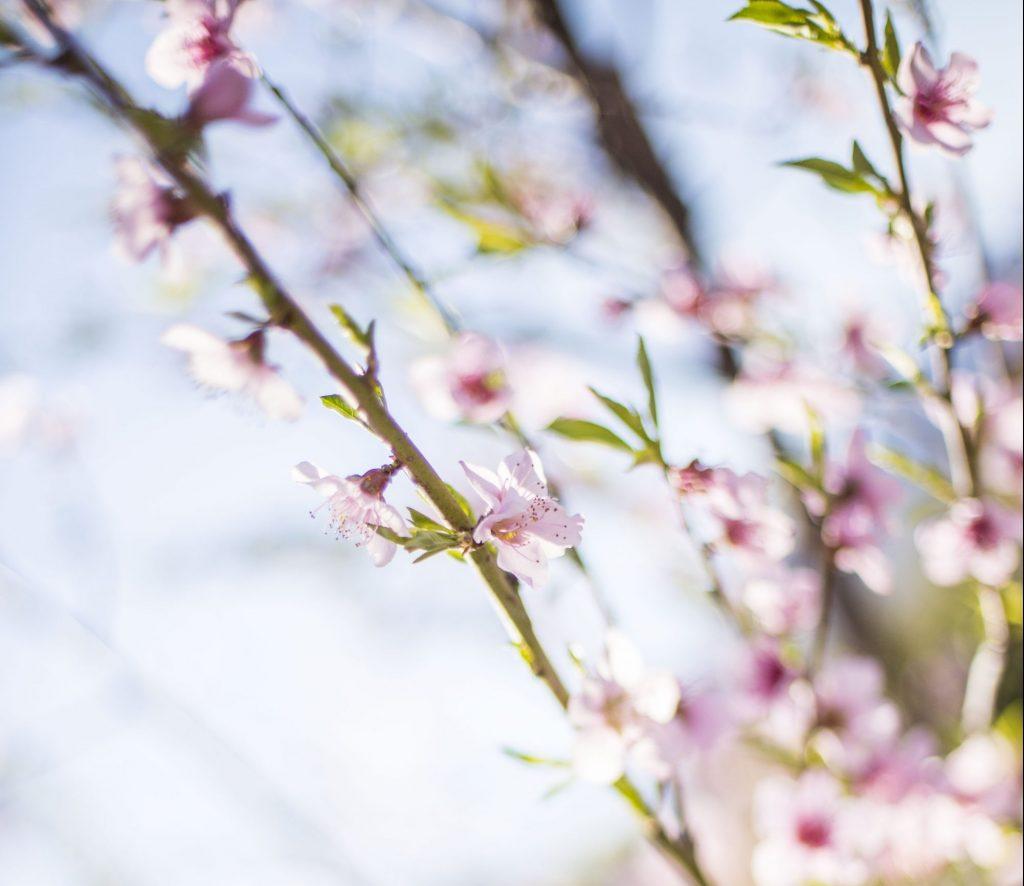 tasting spring e1473854450333 1024x886
