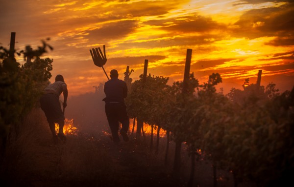 Smoke and Vegetation and Their Influence on Wine