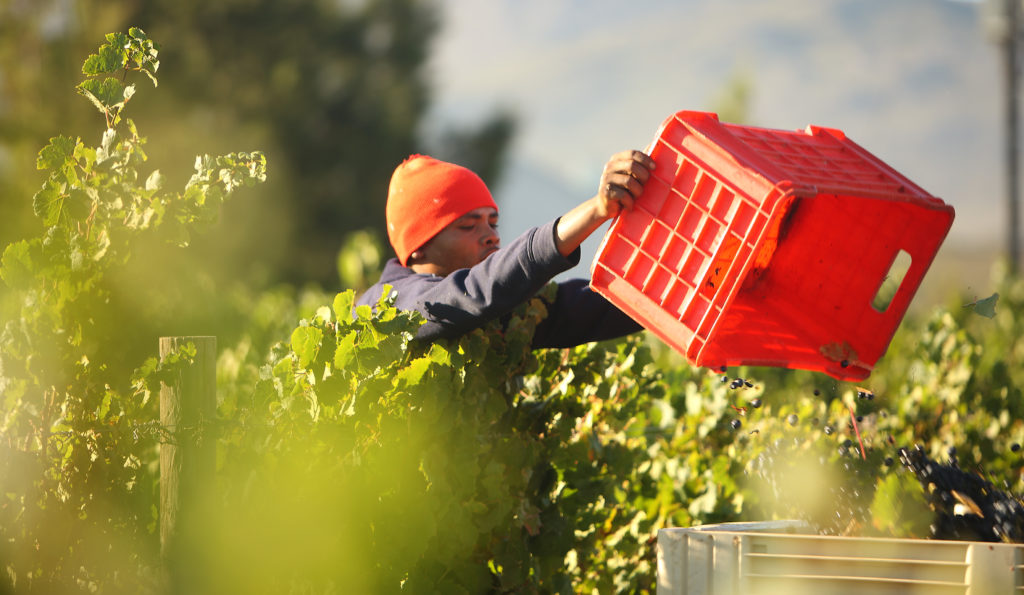 Recession - nothing new for SA wine